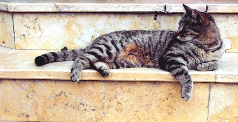 Cat on Marble Steps