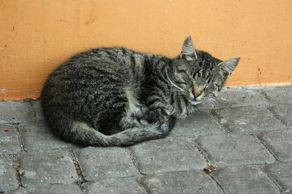 Cat on Pavement