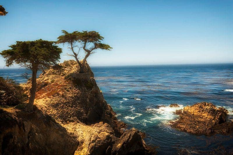 Cypress Trees on a Cliff