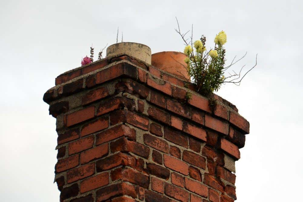 Flowers Growing on a Chimney