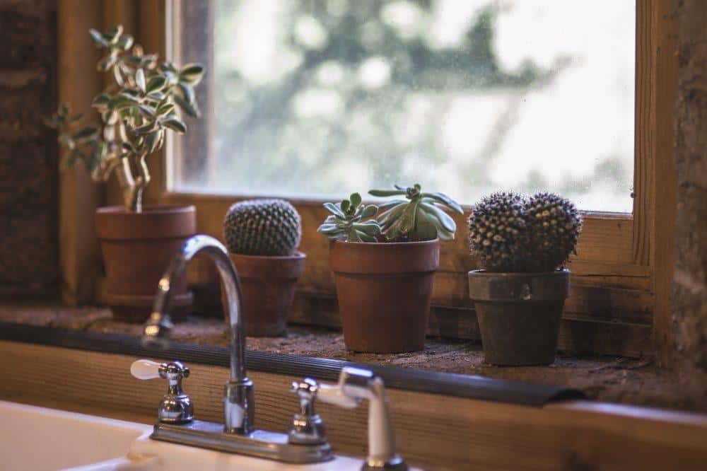 Succulents on the Sink